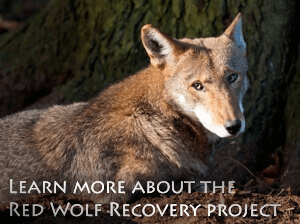 Red Wolf Recovery Project